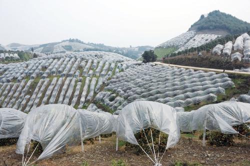 三年四大步广西打造千亿果业实现高质量跨越发展
